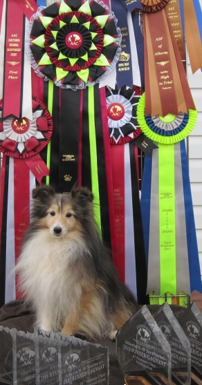Dart with her Ribbons and Trophies - the lifetime award is the biggest one there.