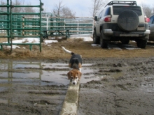 With the spring weather, it got a bit muddy outside, didn't it!