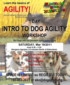 1 Day Agility Workshop