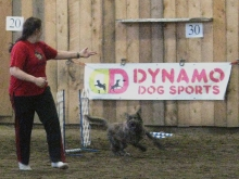 We had an event just for puppies (see how the bars are on the ground?)  Here, Seanna's Aspyn gets a turn.