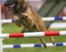 havoc_jumping